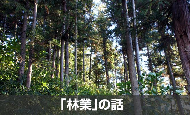 「林業」はどんな仕事なの?概要と特徴、転職アドバイス [業界研究]